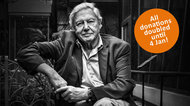 David Attenborough in lack and white with text 'donations doubled until 4 Jan'