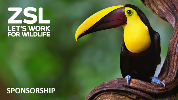 Toucan with ZSL logo and sponsorship wording