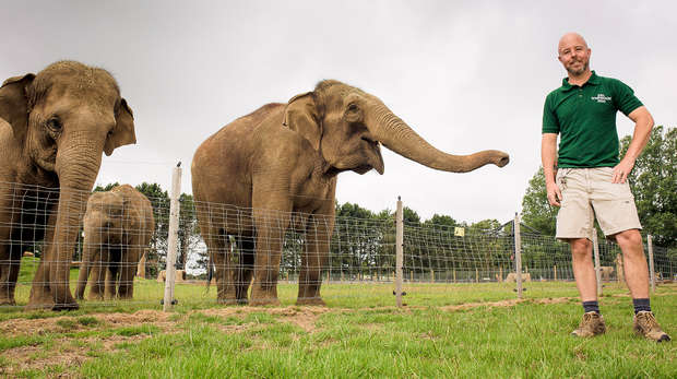 Head Elephant Keeper Stefan Groeneveld with the Asian elephants at ZSL Whipsnade Zoo