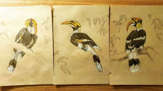 Drawings of a hornbill by Heidi Ma