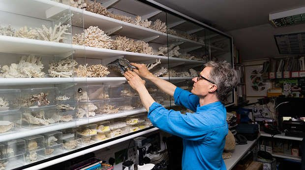 Senior curator Paul Pearce-Kelly places confiscated corals safely in a display case