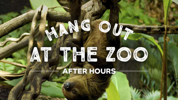 """A sloth hanging upside down with the words """"Hang out at the zoo after hours"""" overlayed on top"""