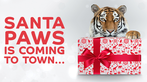 A tiger with it's paw on a gift with text reading 'Santa Paws is coming to town'