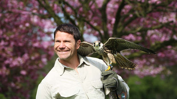 Steve Backshall  with falcon for deadly aerial assassins