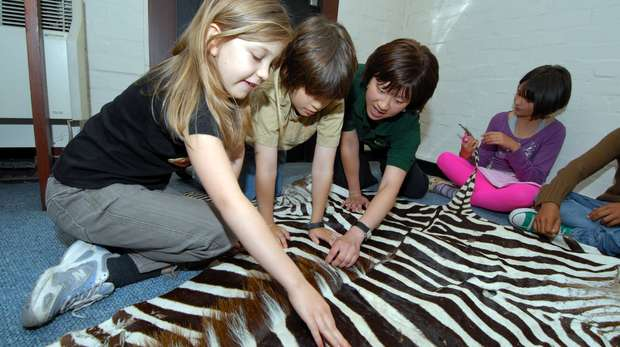 Touch fantastic objects from the natural world in this Key Stage 1 session at ZSL London Zoo