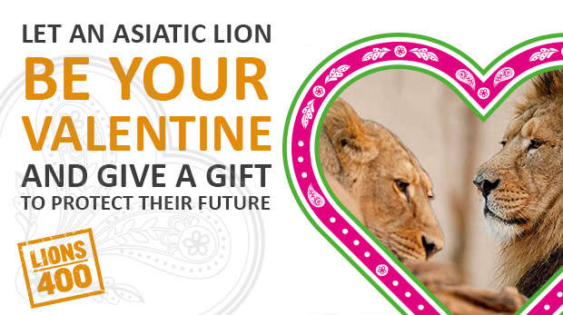 valentines lion tickets