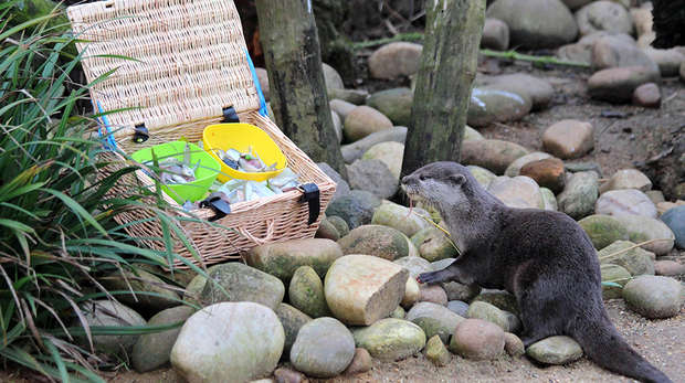 Otter and hamper