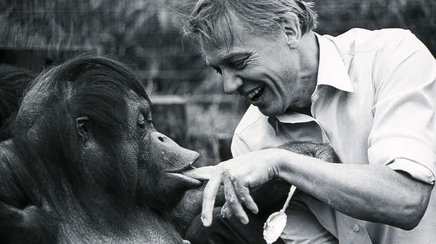 Sir David Attenborough and Bulu the orangutan