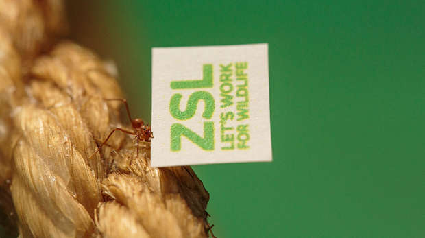 Leafcutter Ant carrying ZSL logo