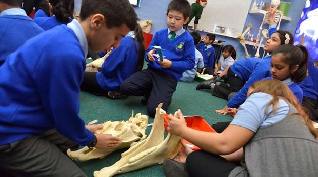 students looking at a skull in the zoo education classroom