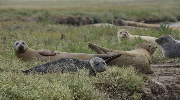 Seals are a real wildlife highlight of the Thames but they also face serious conservation threats