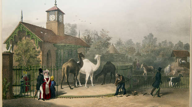 Colour illustration of the Llama Hut with added clocktower circa 1835 with camels, goats and a zebra