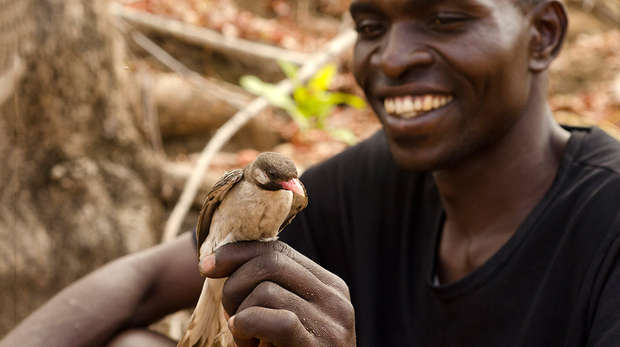 African bird in man's hand