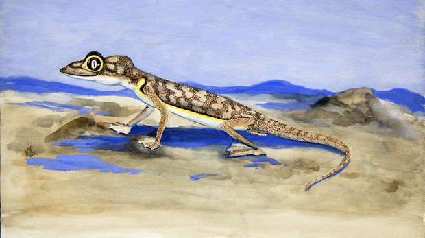 Colour painting of a gecko in a desert landscape