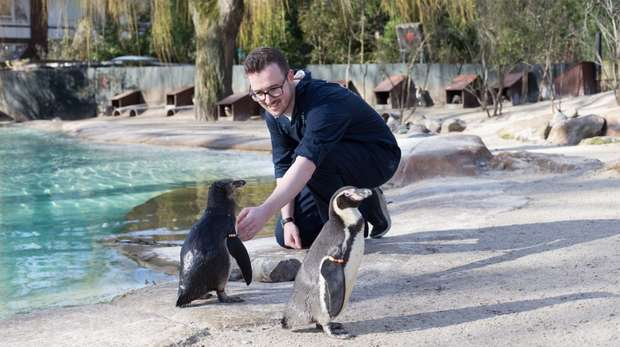 Meeting the Penguins at ZSL London Zoo