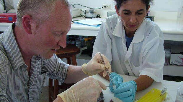 Two scientists wearing rubber gloves investigating a dead animal