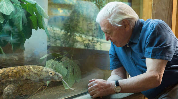 David attenborough looks at a lizard through glass
