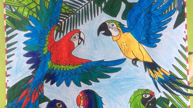 Oliver Gilmartin's winning colouring competition entry