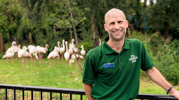 zookeeper stands smiling in front of flamingos at London Zoo
