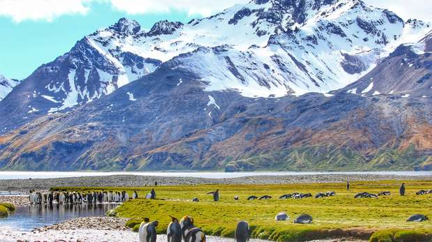 Penguins relax in the foreground of the photo, with the mountains of South Georgia behind them.