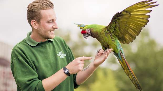 Whipsnade Zookeeper Josh Tall with the incredibly colourful military macaw