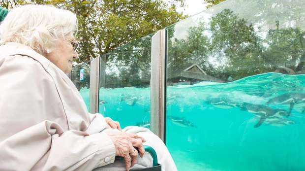 A care resident visits the penguins at ZSL London Zoo