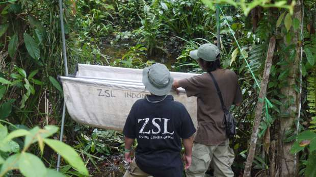 ZSL staff in Indonesian forest