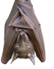 Cutouit of a bat