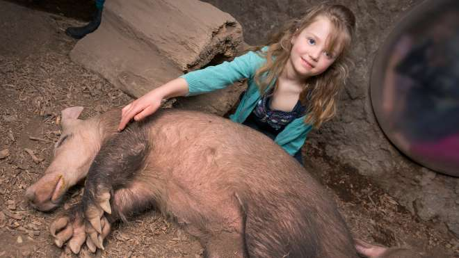 A child plays with a sleeping aardvark for her meet the aardvark encounter