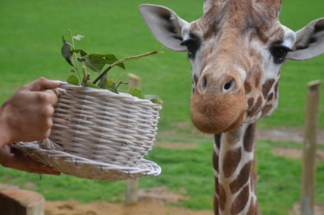 Giraffe tea party