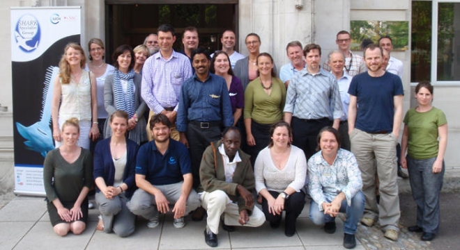 Global Sawfish Conservation Strategy Group