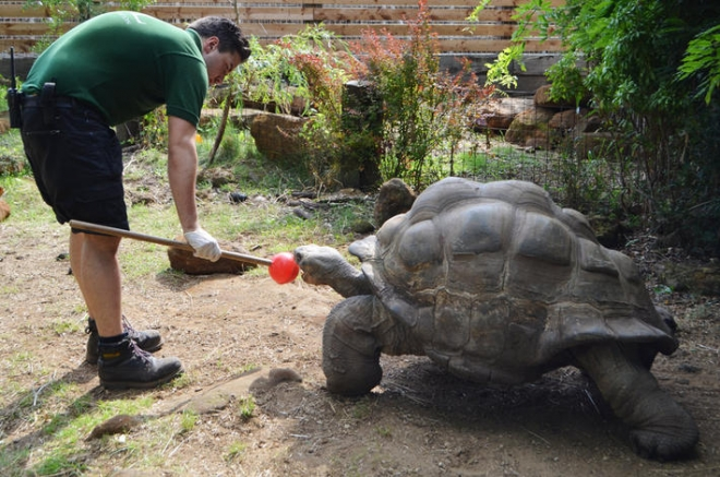 How To Entertain A Giant Zoological Society Of London