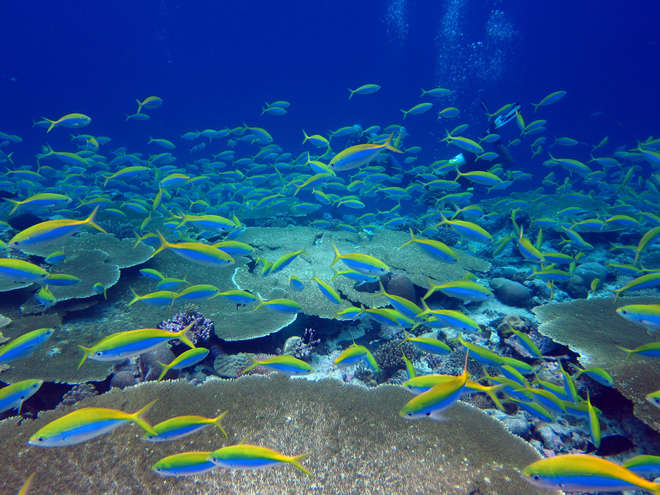Chagos coral reef