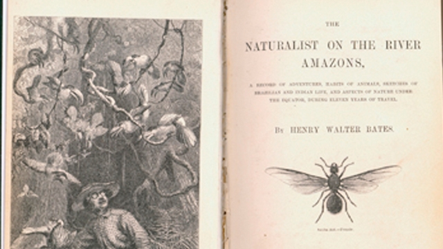 Wallace being attacked by toucans in the Brazilian rain forest - image opposite the title page of 'The naturalist on the river Amazons'