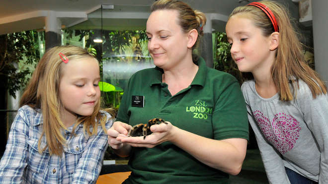 BedBUGS Sleepovers Zoological Society Of London ZSL - Children's birthday party london zoo