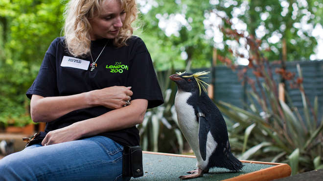 Meeting penguins as part of the Keeper for a Day experience
