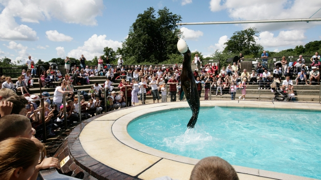 Sealion splash live!