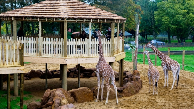 a study about london zoo management Published: thu, 04 may 2017 the zoological society of london known as zsl was founded by stamford raffles in 1826 and in 1828 it was opened to member of london zoological society for the study of animals, zoo was on open to public until 1947 to get aid funding.