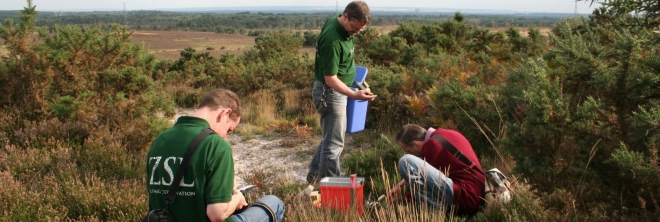 ZSL Releasing red barbed ants at Chobham Commin