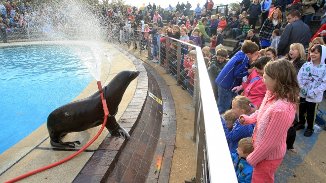 Sealion Splash demonstration