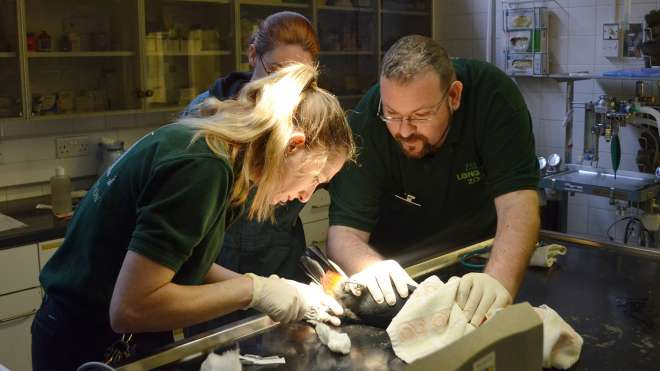 Zoo veterinary careers day zoological society of london for Extra mural courses