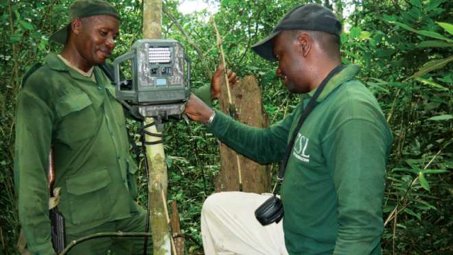 A ranger being trained with a camera trap in the Democratic Republic of the Congo, part of the EDGE's Okapi conservation work.