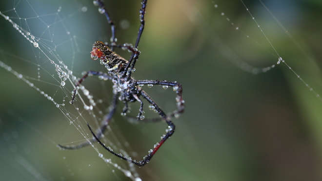 In With The Spiders | Zoological Society of London (ZSL)