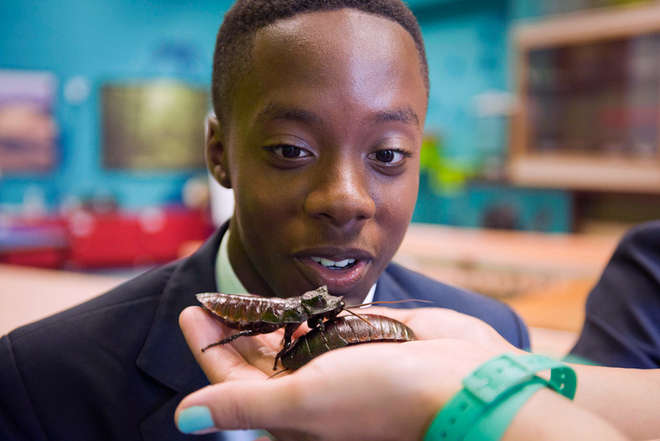 Pupil looking at hissing cockroach