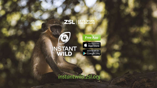 Instant Wild  is the free app that puts conservation at your fingertips