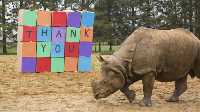 ZSL's greater one horned rhinos say thank you to the players of People's Postcode Lottery