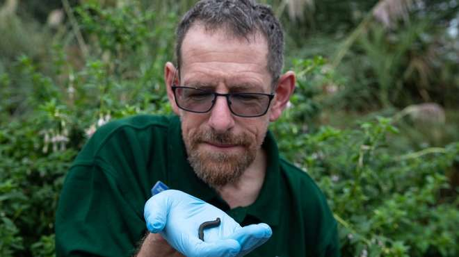 Dave with a leech at ZSL London Zoo