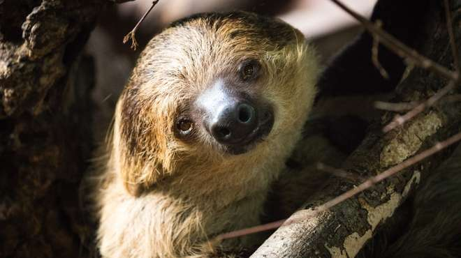 Marilyn the sloth at ZSL London Zoo