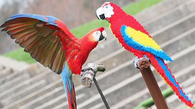 Inca investigates a life-size sculpture of a colourful macaw