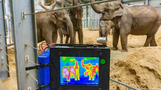 Photo - Three elephants feeding in their enclosure whilst a young elephant plays behind them, with a thermal imaging camera set-up in the foreground.